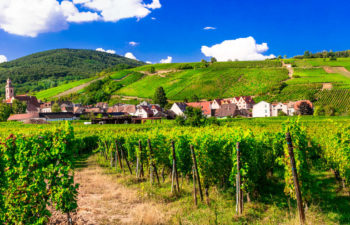 Vineyards of France. Famous Alsace region with pictorial traditi